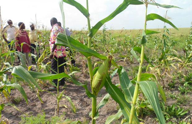 Les Chefs d'Etat africains déterminés à éradiquer la famine d'ici 2025. (Photo BEF)
