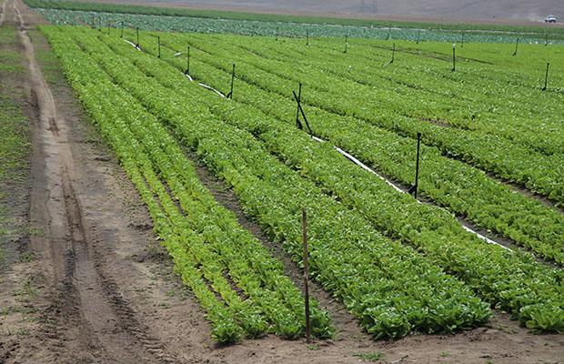 Un champs agricole en RDC. (Photo BEF)
