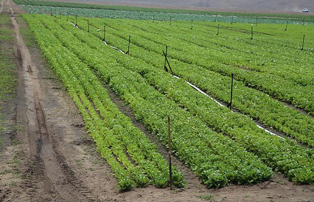 Vue d'un champ agricole en RDC. (Photo BEF)