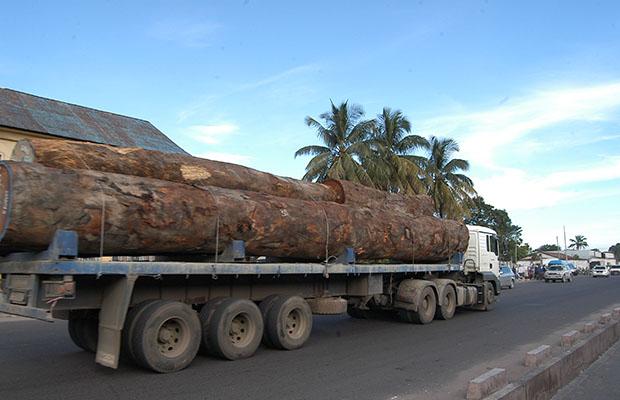 Un cargo de bois. (Photo DR)
