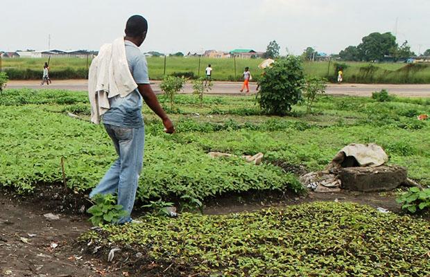 Champs de légumes le long d'une voie principale à Kinshasa. (Radio Okapi)
