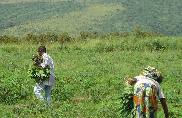 L'Afrique peut doubler sa productivité agricole au cours des 5 prochaines années. (BEF)