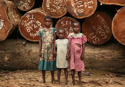 feature__0013_19_01 – exploitation du bois, une des ressources de la RDC Congo. Le gouvernement congolais est appelé à r