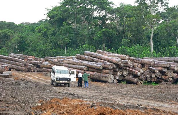 Troncs d'arbres dans la concession Safbois à Djabir, près d'Isangi (Province-Orientale).