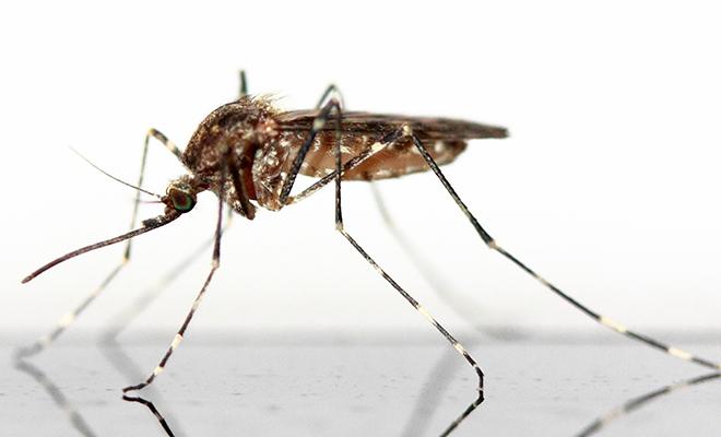 Quelques espèces seulement sont responsables de 600.000 morts de malaria par an.