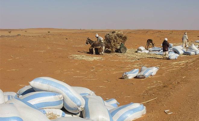 Difficile de savoir si les terres acquises par les Saoudiens appartenaient autrefois à des Soudanais.